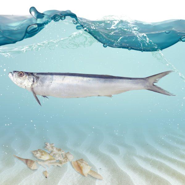 فروش ماهی خارو