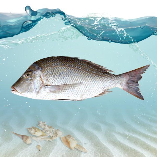 خرید ماهی شعری