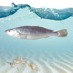 خرید آنلاین ماهی شوریده