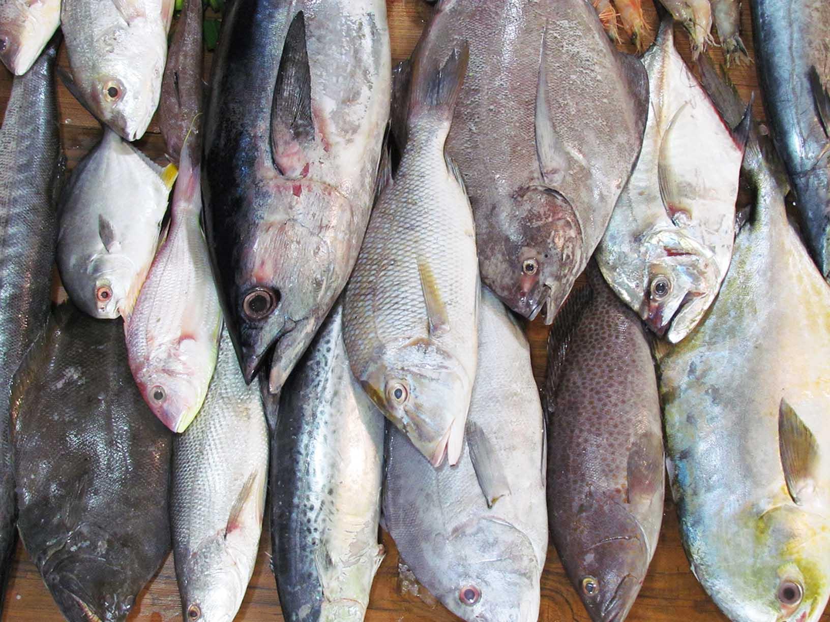 ماهی شمال بهتر است یا جنوب