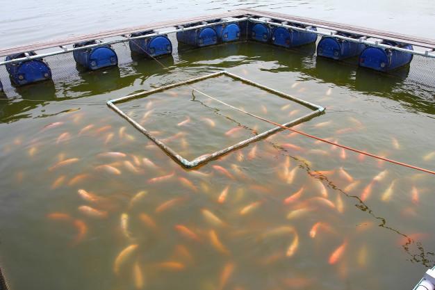 ماهی دریایی یا ماهی پرورشی بخوریم؟