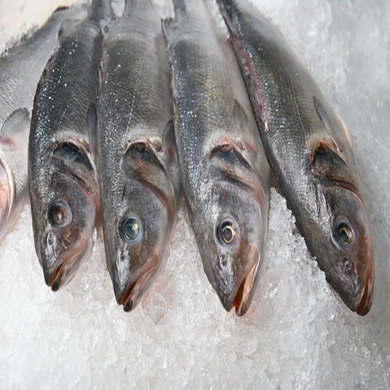 یخ زدایی و فریز کردن ماهی