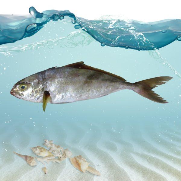 ماهی همام