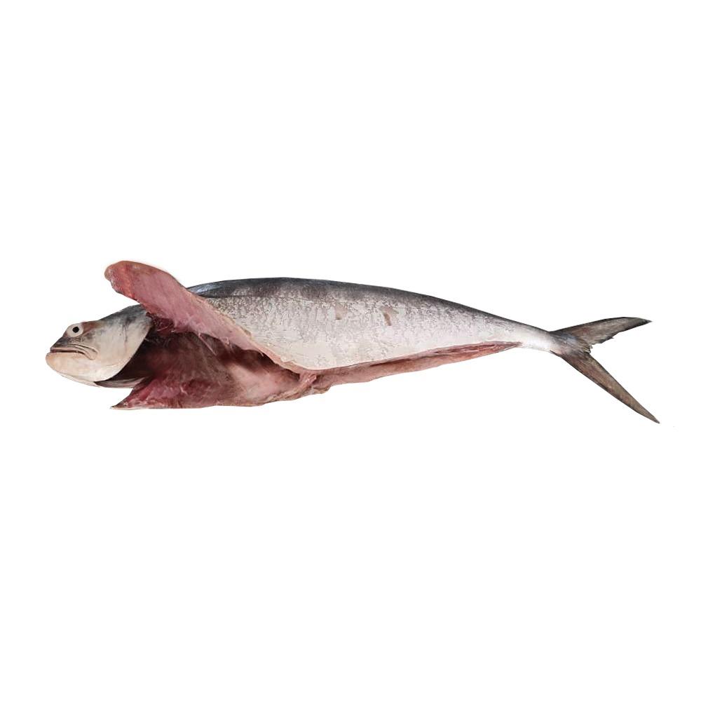 خرید ماهی سارم شکم خالی