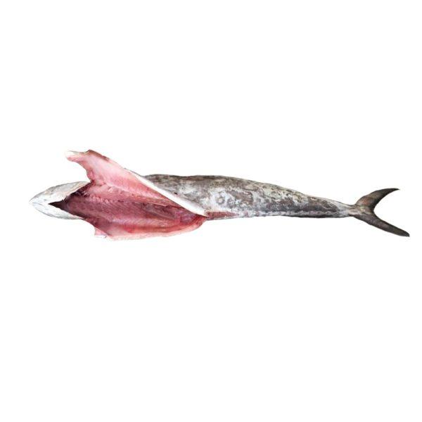 خرید ماهی شیر شکم خالی