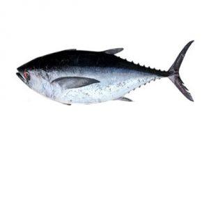 خرید ماهی هوور