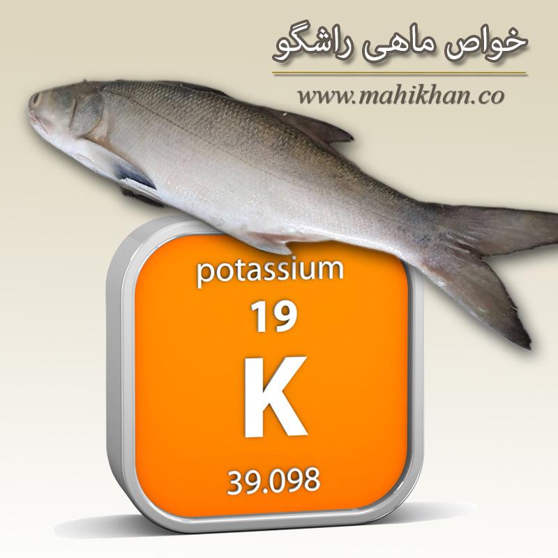 خواص ماهی راشگو