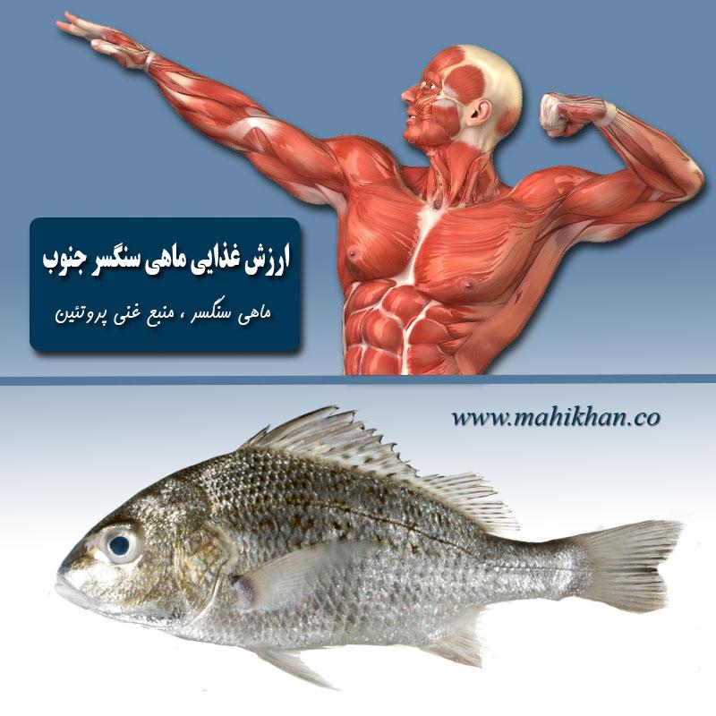 خواص ماهی سنگسر