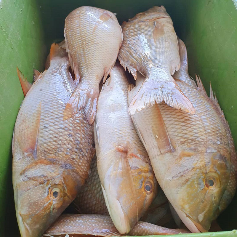 خواص ماهی شعری