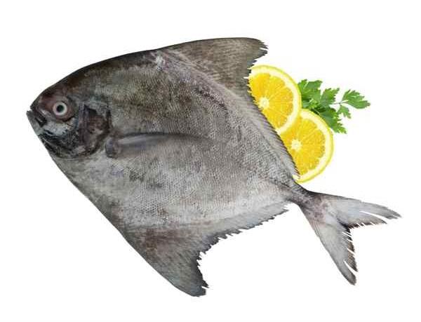 انواع ماهی جنوب