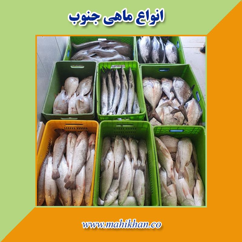 انواع ماهی دریایی جنوب