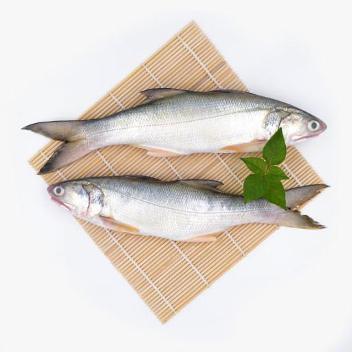گرانترین ماهی جنوب