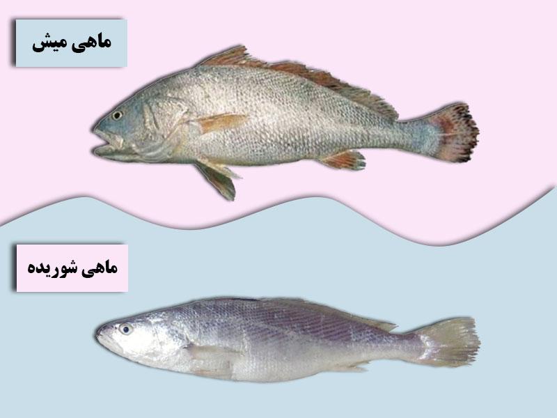 خواص ماهی میش