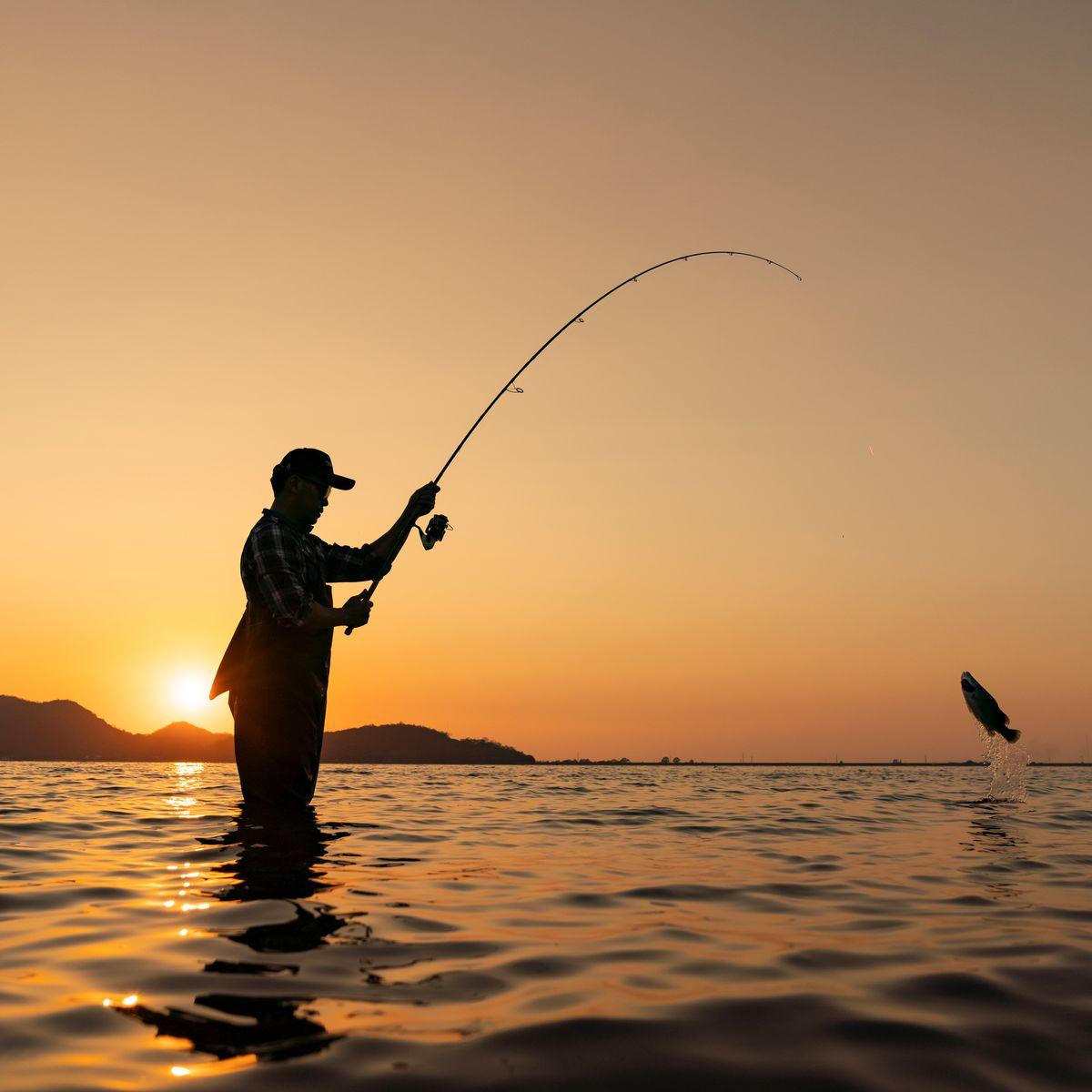 مهمترین مناطق صید ماهی