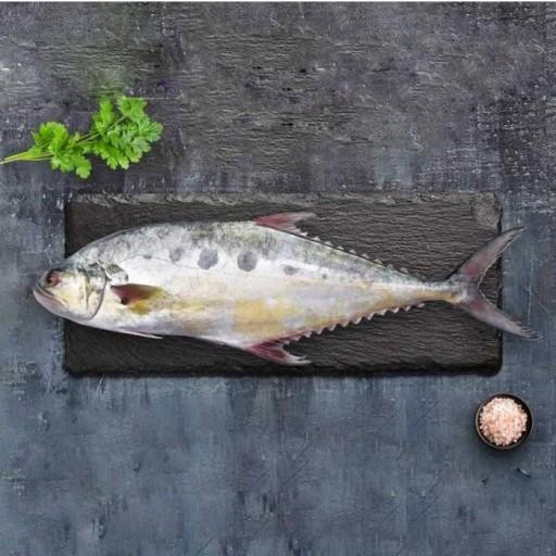 خواص ماهی سارم