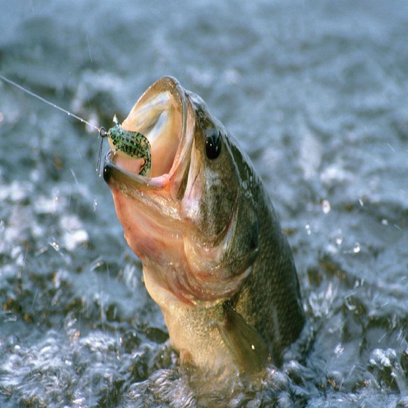 طعمه ماهیگیری