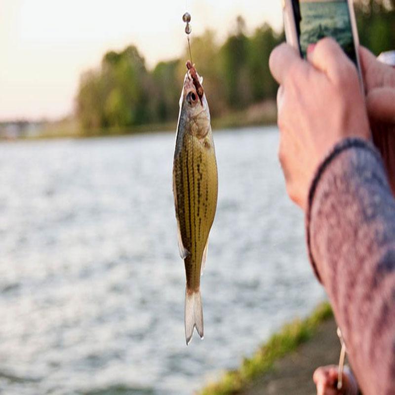 انواع قلاب ماهیگیری
