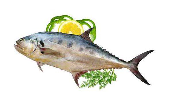 ماهی شیر بندر