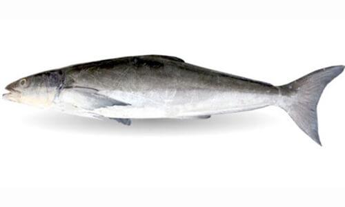 خواص ماهی سکن