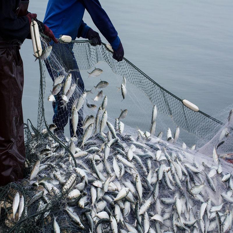 انواع تور ماهیگیری
